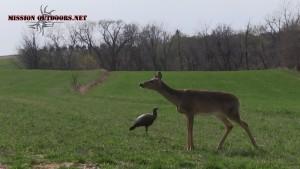 Deer Encounter 1