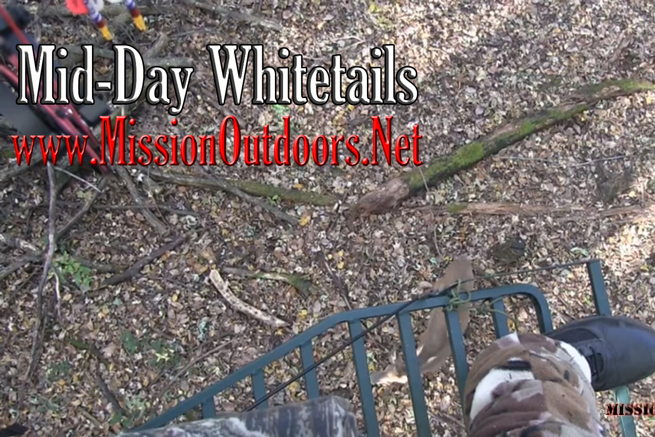 Mid-Day Whitetails
