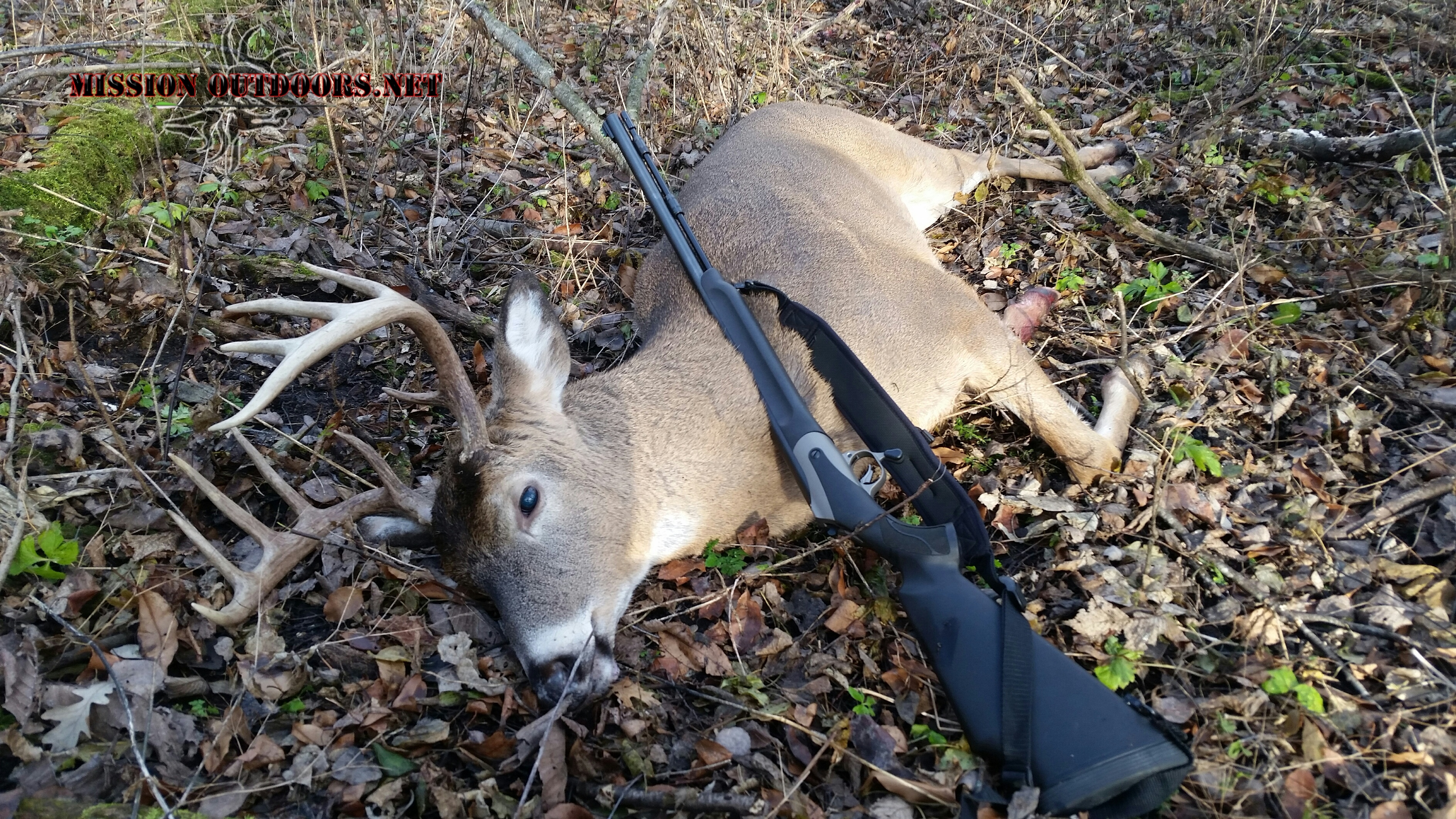 Minnesota deer numbers have recovered