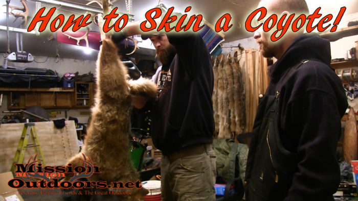 How to Skin a Coyote for the Fur Market