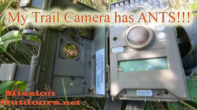 How to Keep Ants out of Trail Cameras